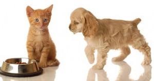 pet trusts2